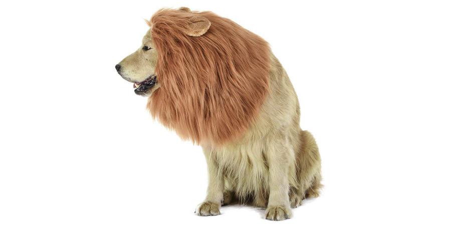 disfraz de leon para perro leones