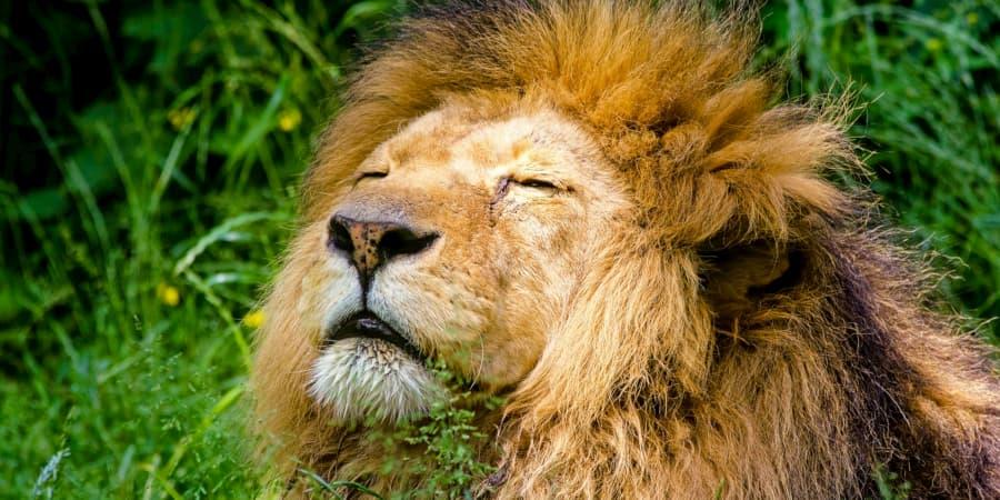 melena leon leona leones